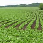 農学部とは 就職状況、将来性、学ぶ内容を解説